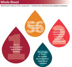 Whole Blood Facts