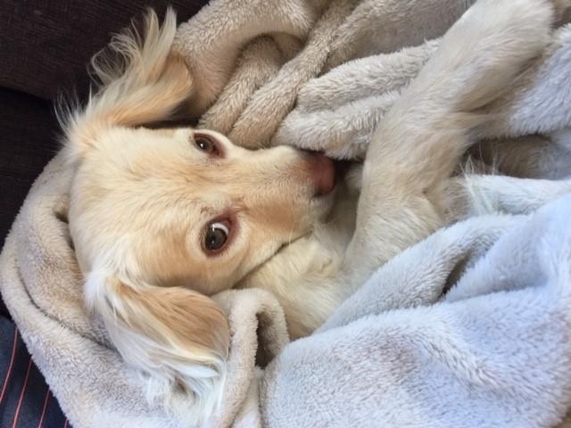 Bamm-Bamm the dog